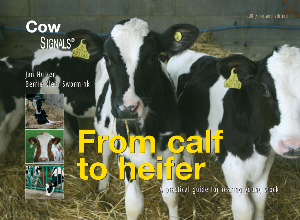 from calf to heifer HR